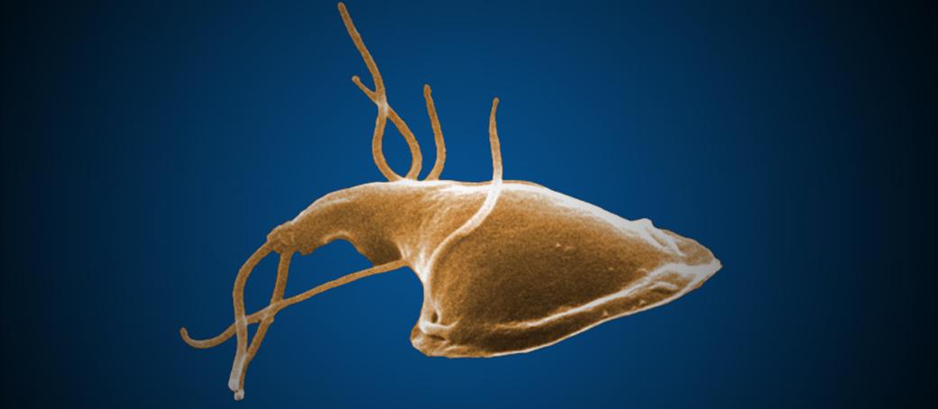 Giardia-fertőzés - EgészségKalauz