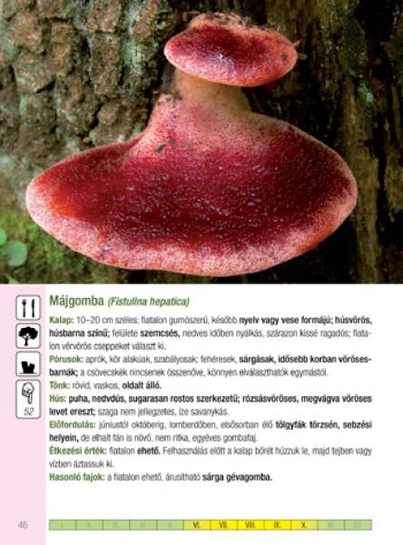 gombát az éhomi kemencében