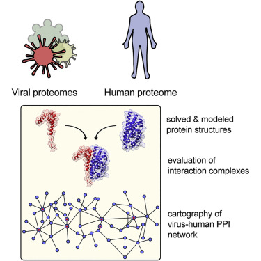 humán papillomavírus bélrák