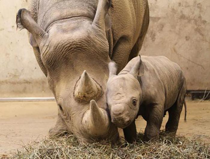 Döbbenetes felvétel: szülés élőben a nyíregyházi állatparkban - karpitosrugo.hu
