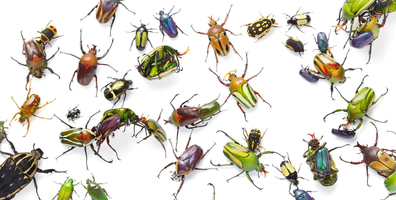 különböző típusú rovarok zsálya szemölcsök