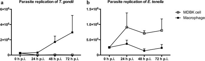 paraziták apicomplexan inváziója a gazdasejtekbe