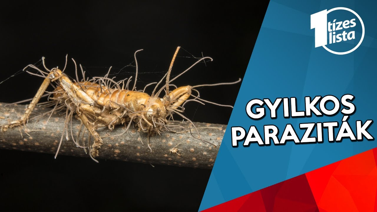 paraziták lejátszási listája