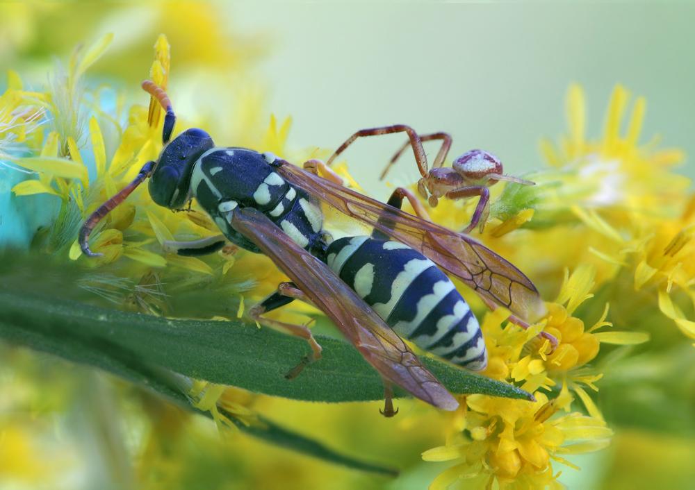 Protozoánok, amelyek emberi paraziták, A paraziták eltávolítása otthon