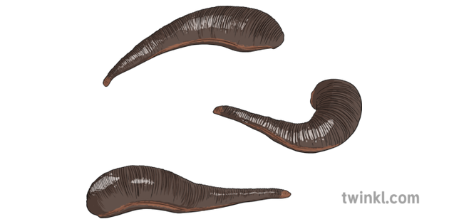 Platyhelminthes flatworms ppt