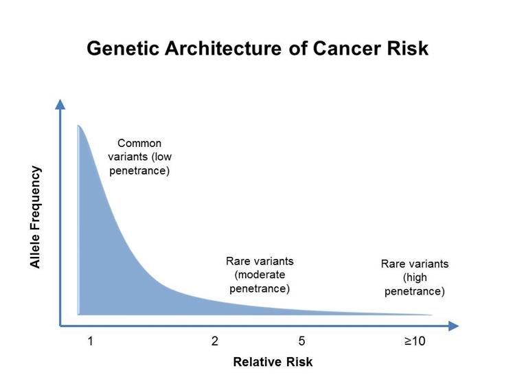 vastagbélrák genetikai heterogenitás)