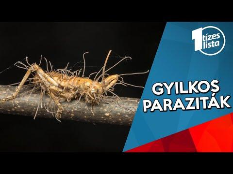absztrakt paraziták