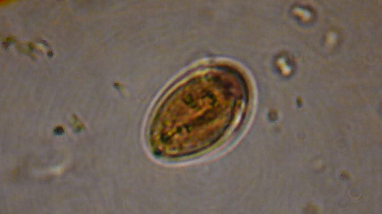 szilícium kezelés paraziták ellen