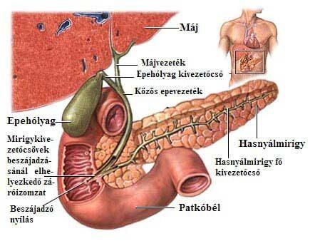 hashártya rák elzáródása)