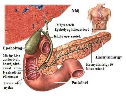 epehólyagrák tünetei