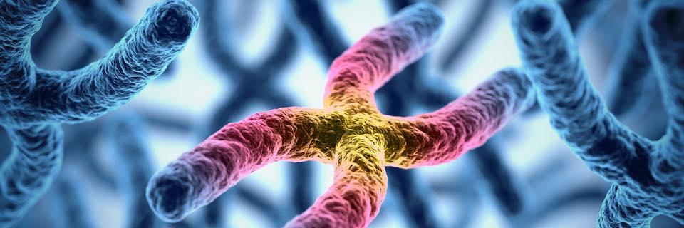 genetikai vagy környezeti rák