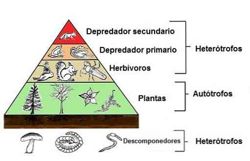 paraziták az élelmiszerhálózatokban