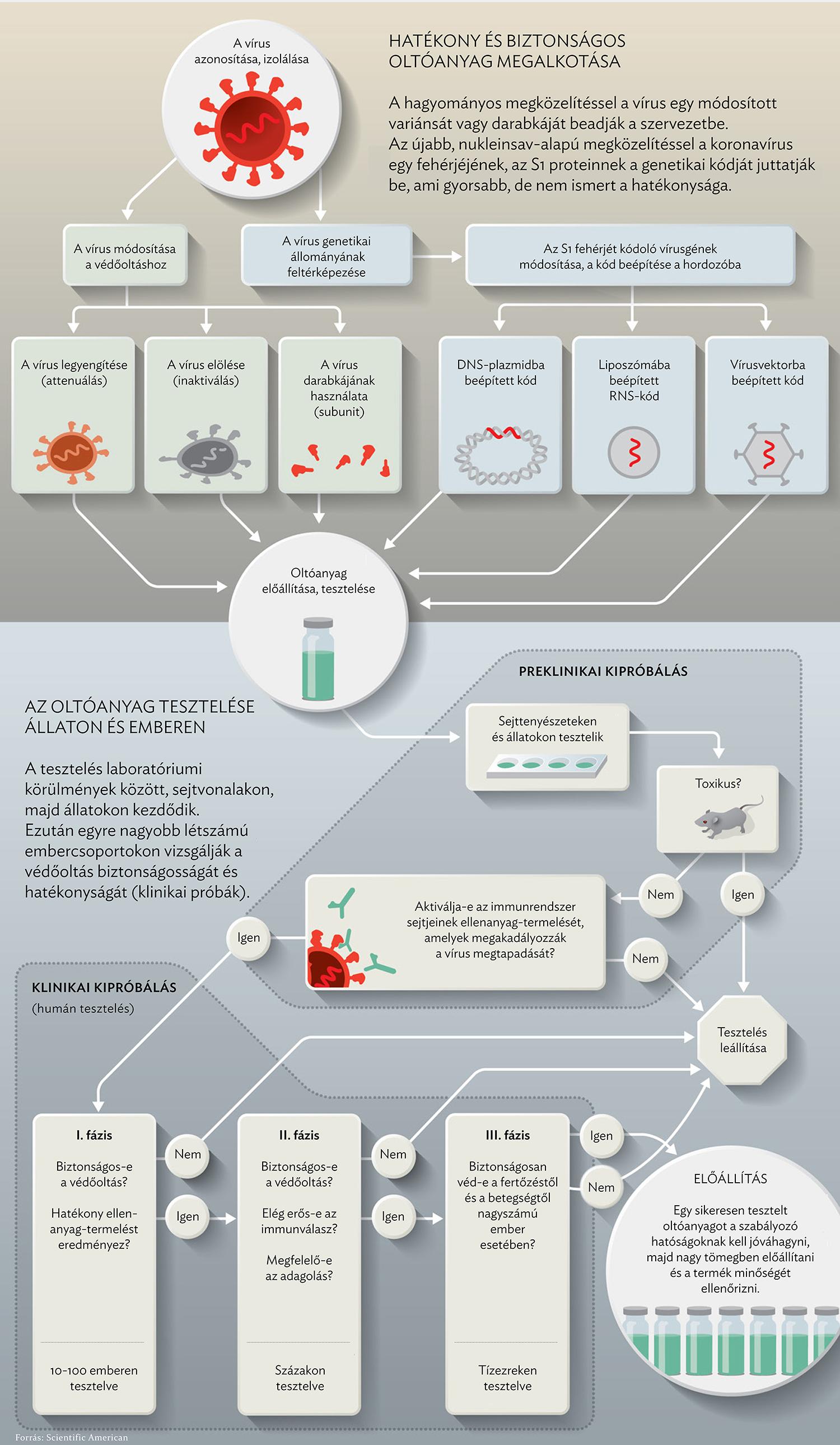 humán papillomavírus vakcina mechanizmus hatása)