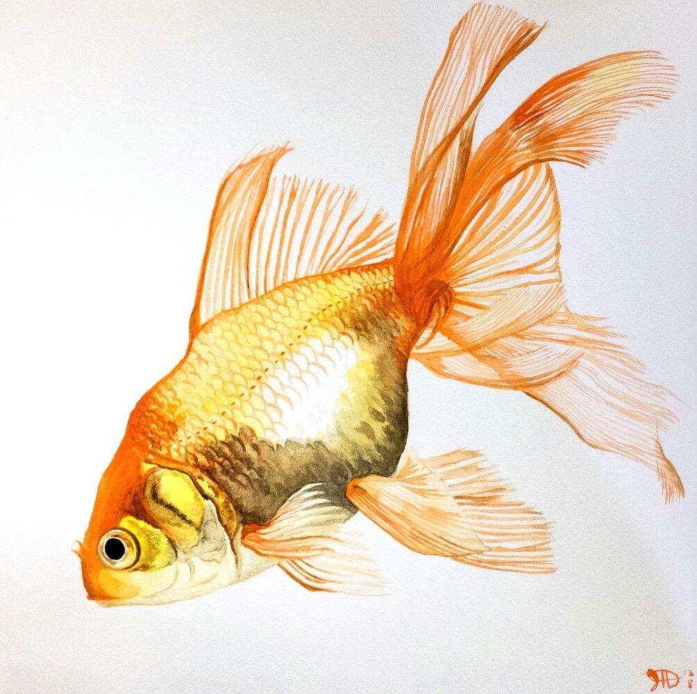 aranyhal gyűrűk)