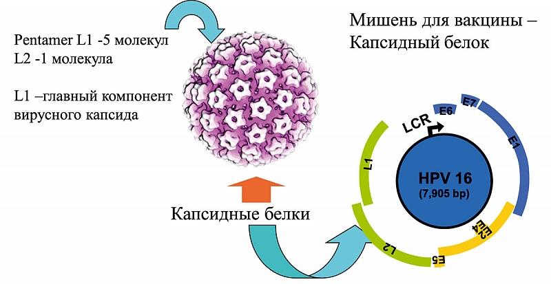 hpv torokrák gardasil vakcina)