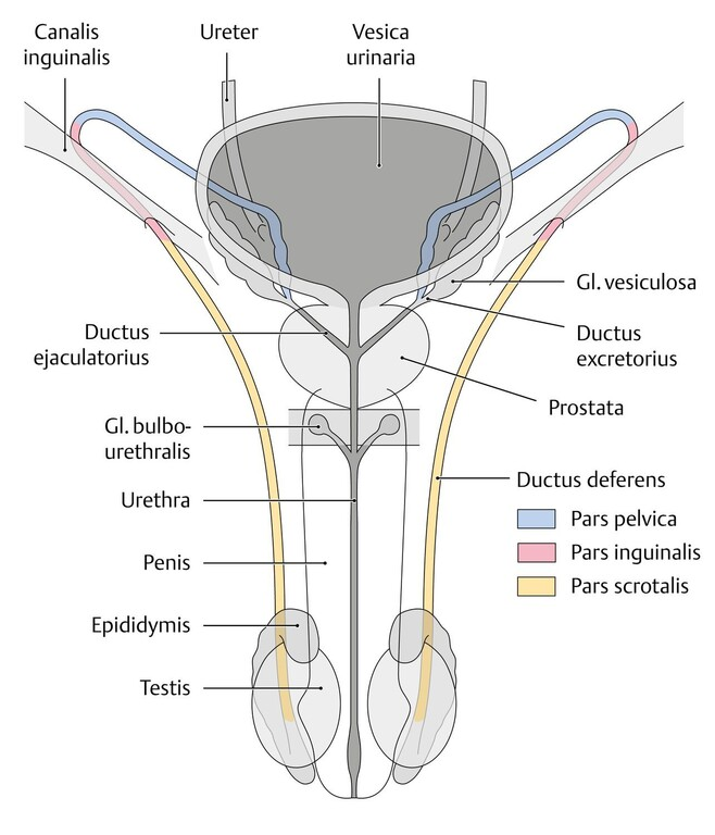 Andrológiai (férfigyógyászat) szakrendelés - Dr. Albert István