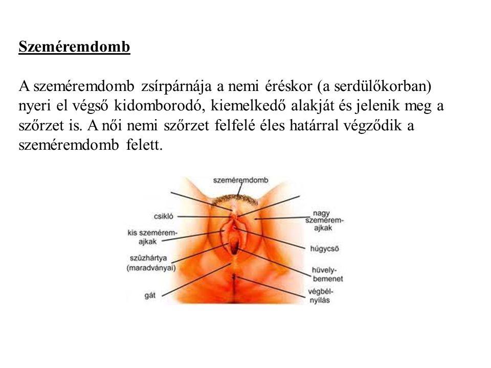 a húgycső külső nyílásának genitális szemölcsök