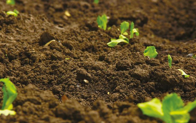 talaj ürülékében