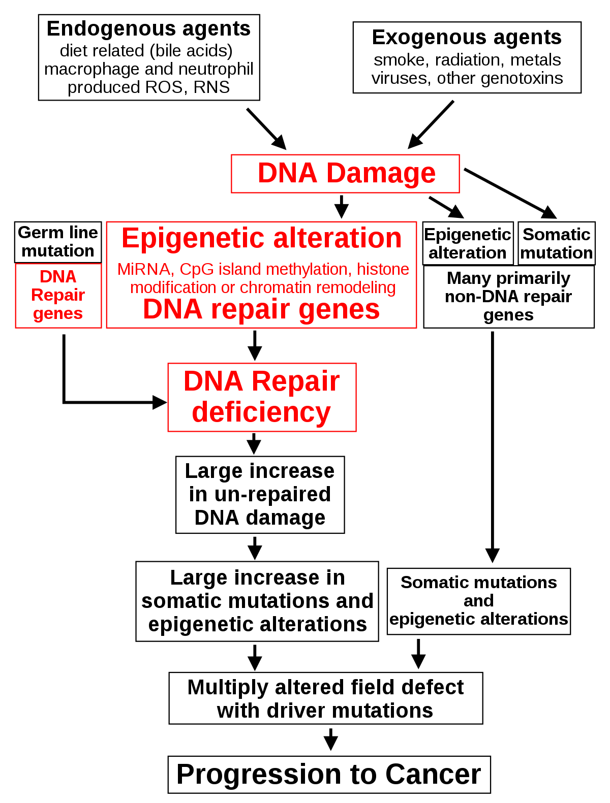 Onkológiai kislexikon (1.): kifejezések