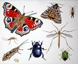 különböző típusú rovarok szemölcsök a nyelven hogyan lehet eltávolítani