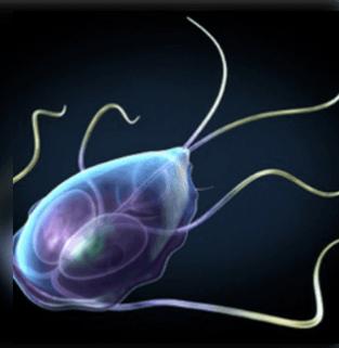 Vázlatos paraziták. BIO-LOGIA: Parazita férgek