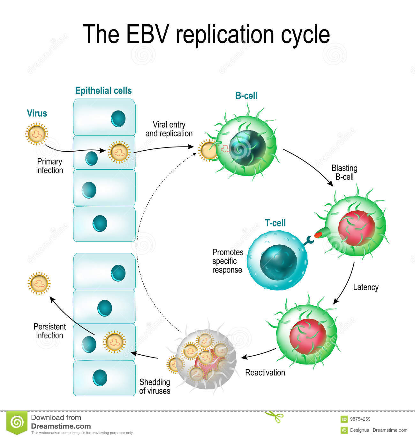 vírus epstein barr